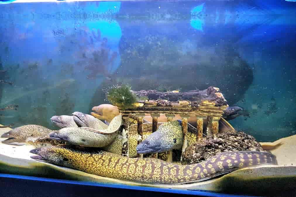 Leonardo Hotels & Resorts Mediterranean - aquarium_06.jpg